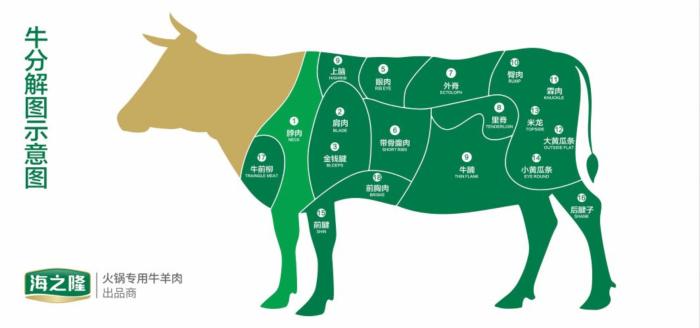 牛上脑部位图